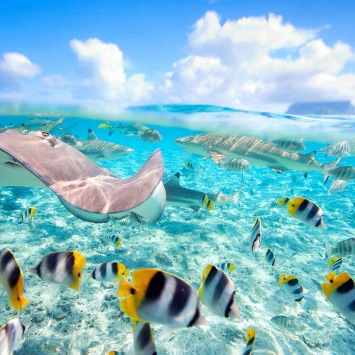 Travel all around the world and discover the underwater world with your MiniDive 😁✈️🐠 #snorkeling #minidive #fish  #travel #sea #paradise #underwater   Find our products on our website : www.minidive.com